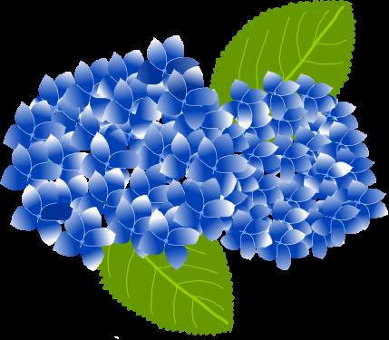 紫陽花の画像2