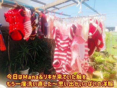 洗い直した洋服