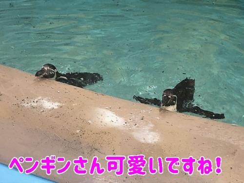 ペンギンさん可愛です