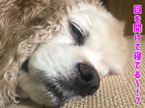 目を開けて寝てる?
