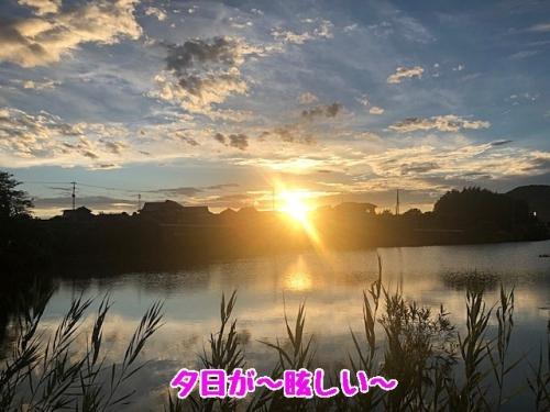 夕日がまぶしい