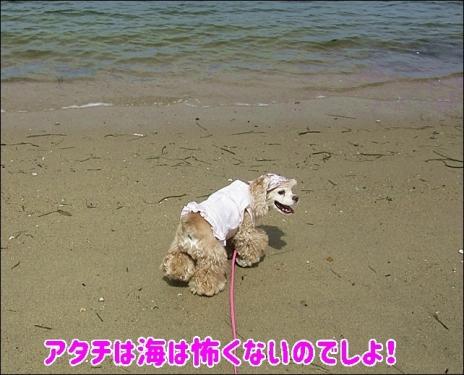 アタチは海は怖くないのよ