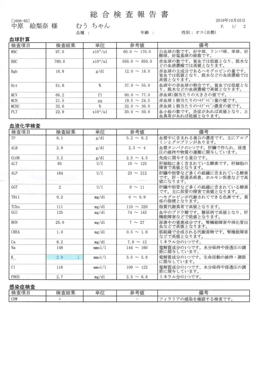 むぅ総合検査報告書