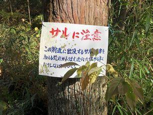 幕山公園@湯河原 (2)