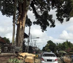 バリ島 メングウィ倒木