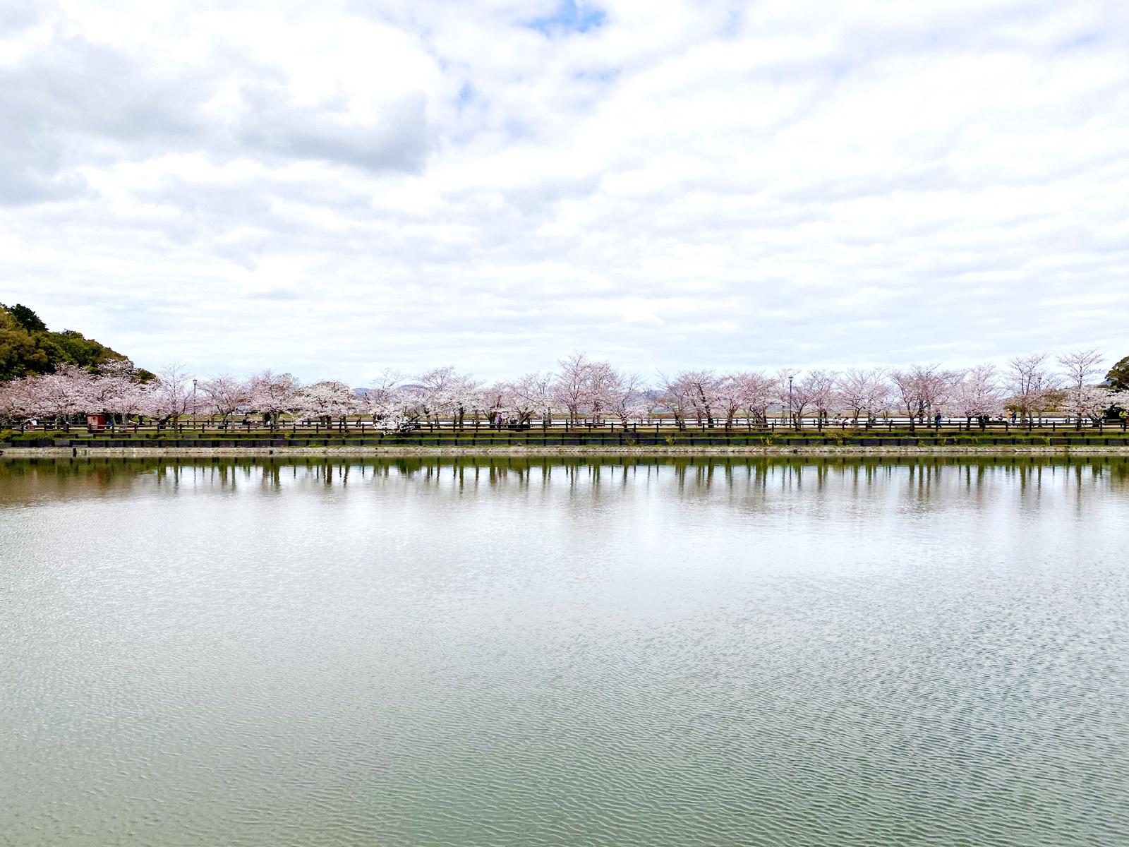 池のほとりから見た風景