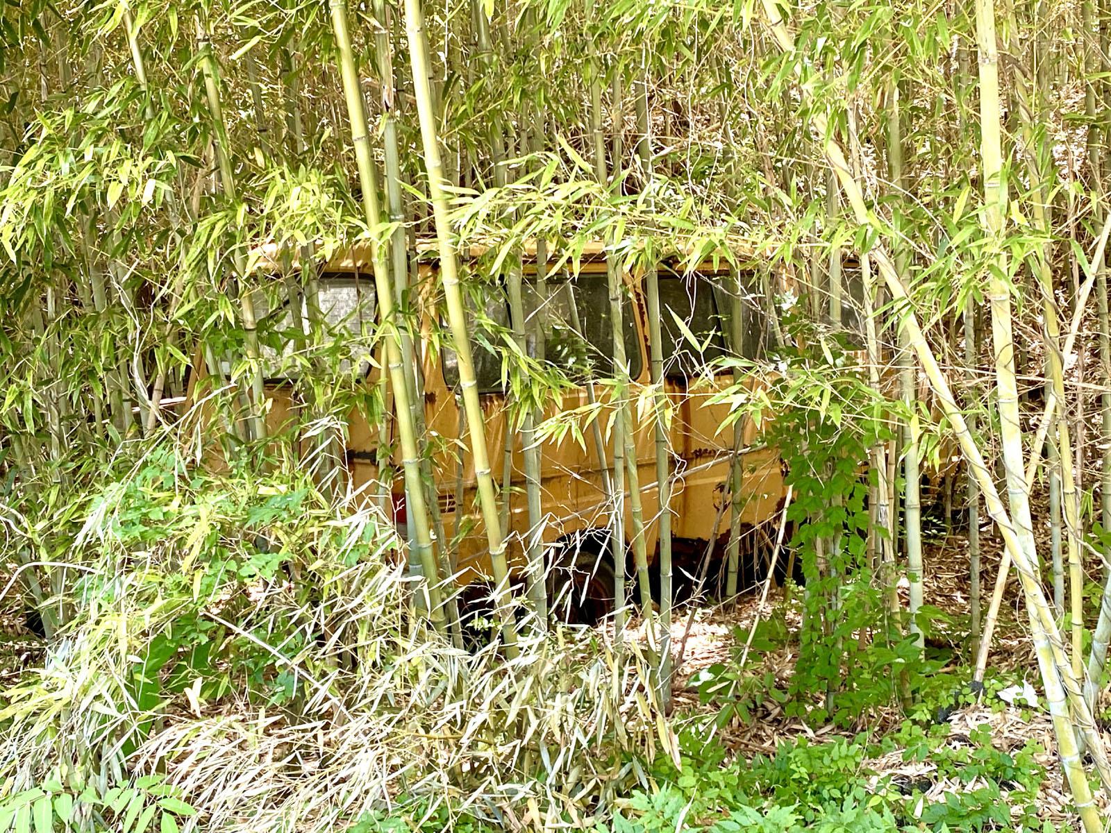 竹藪と一体化