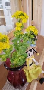 20200311_菜の花