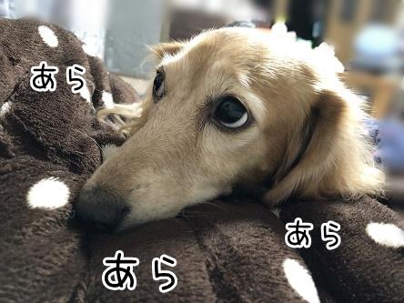 kinako17561.jpeg