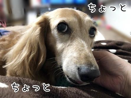 kinako17562.jpeg