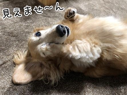 kinako17571.jpeg