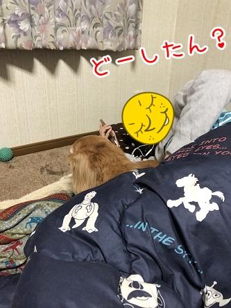 kinako17572.jpeg