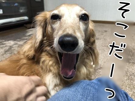 kinako17593.jpeg