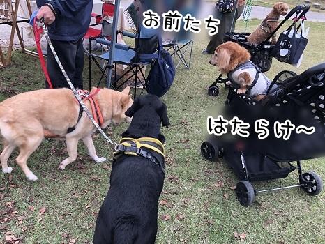 kinako17655.jpeg
