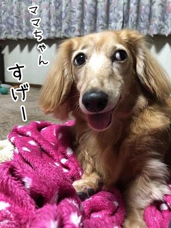 kinako17692.jpeg