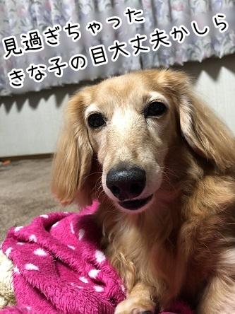 kinako17694.jpeg