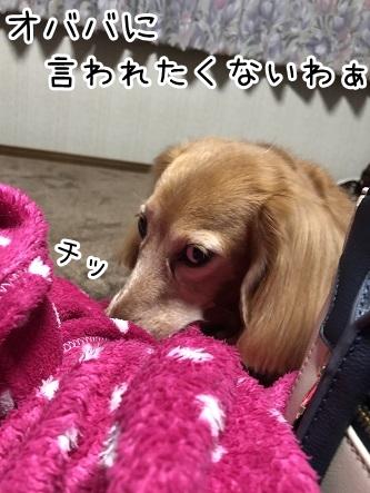 kinako17698.jpeg