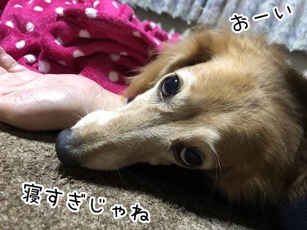 kinako17699.jpeg