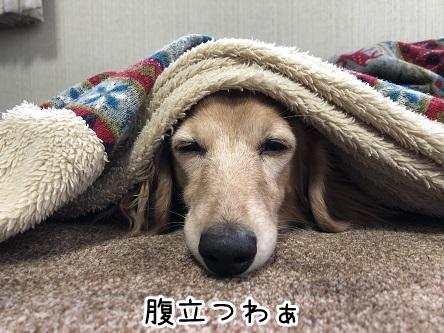 kinako17713.jpeg