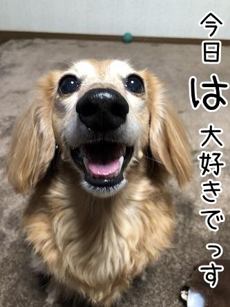 kinako17724.jpeg
