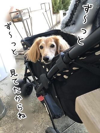 kinako17732.jpeg