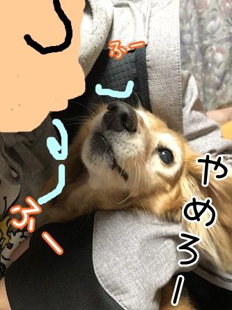 kinako17738.jpeg