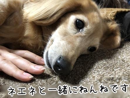 kinako17759.jpeg
