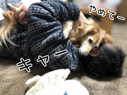 kinako17766.jpeg
