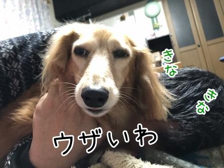 kinako17767.jpeg