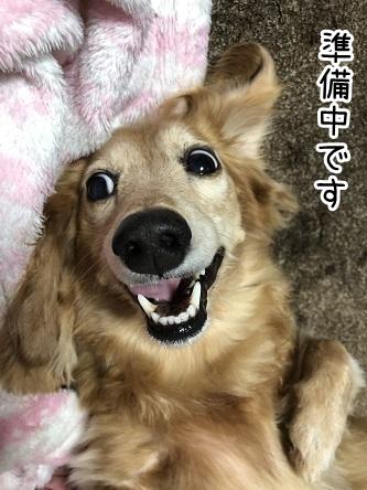 kinako17769.jpeg