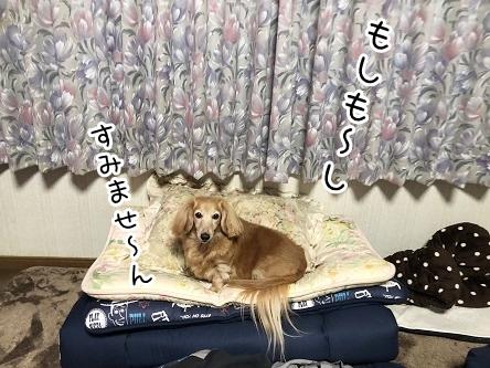kinako17779.jpeg
