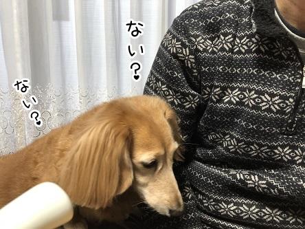 kinako17892.jpeg