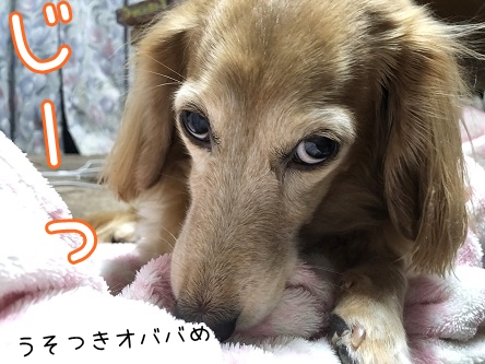 kinako17900.jpeg