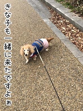 kinako17913.jpeg