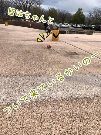 kinako17919.jpeg