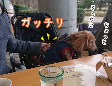 kinako17924.jpeg