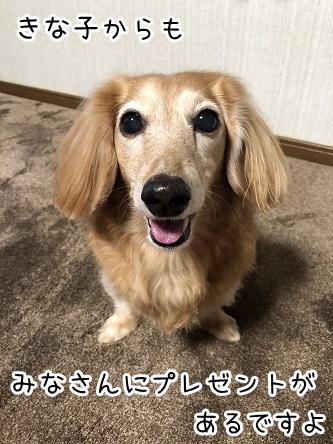 kinako17966.jpeg