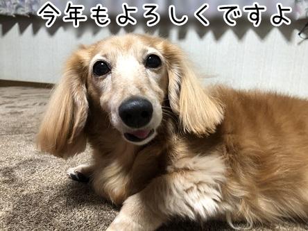 kinako17999.jpeg