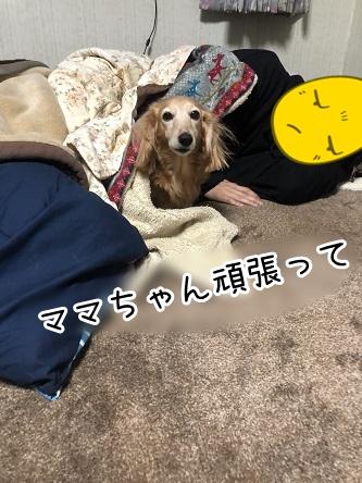 kinako18030.jpeg