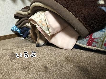 kinako18045.jpeg