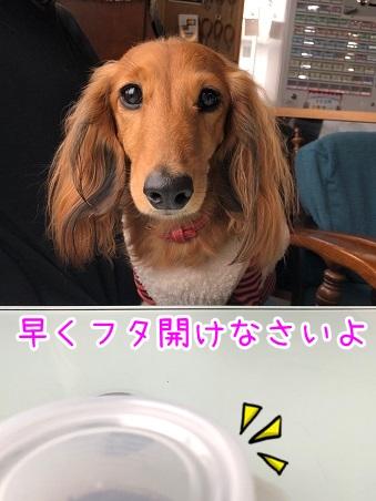 kinako18051.jpeg