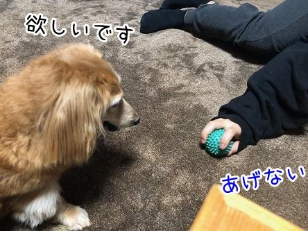 kinako18063.jpeg