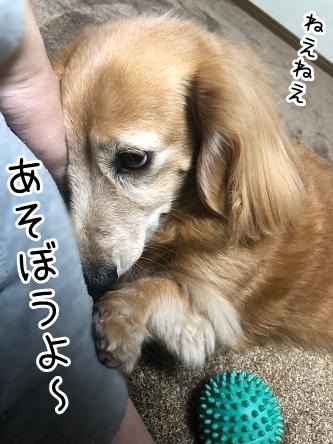 kinako18072.jpeg