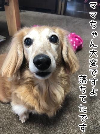 kinako18074.jpeg