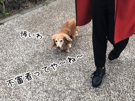 kinako18085.jpeg