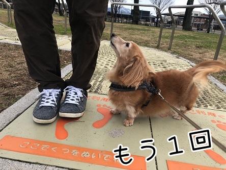 kinako18090.jpeg