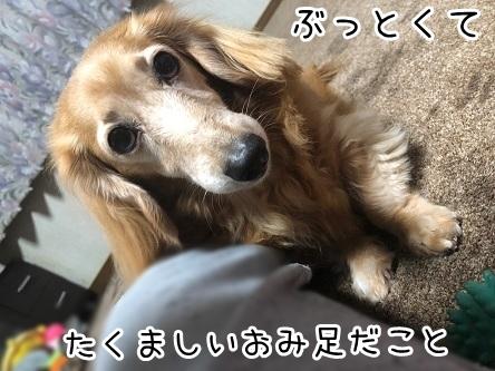 kinako18093.jpeg