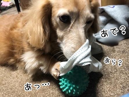kinako18121.jpeg