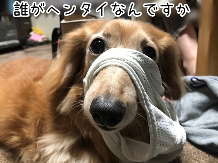 kinako18124.jpeg