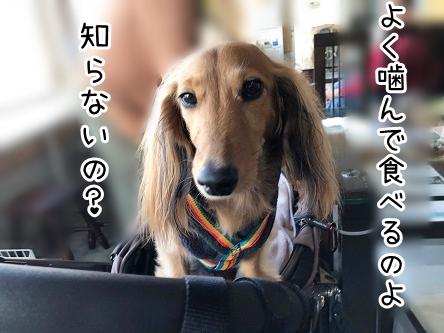 kinako18138.jpeg
